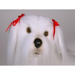 http://animalprops.com/1165-thickbox_default/lacey-maltese-dog-stuffed-plush-animal-display-prop.jpg