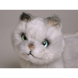 http://animalprops.com/187-thickbox_default/toby-british-shorthair-cat-stuffed-plush-display-prop.jpg