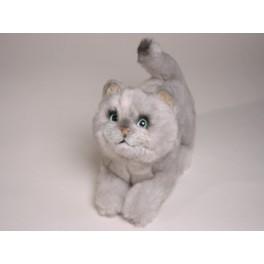 http://animalprops.com/190-thickbox_default/chessie-british-shorthair-cat-stuffed-plush-display-prop.jpg