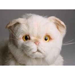 http://animalprops.com/213-thickbox_default/chauncey-chinchilla-golden-persian-cat-stuffed-plush-display-prop.jpg
