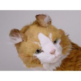 http://animalprops.com/281-thickbox_default/azrael-maine-coon-cat-stuffed-plush-display-prop.jpg