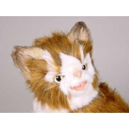 http://animalprops.com/284-thickbox_default/bloo-maine-coon-cat-stuffed-plush-display-prop.jpg