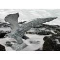 MacArthur Eagle