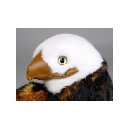http://animalprops.com/36-thickbox_default/liberty-giant-bald-eagle-display-prop.jpg
