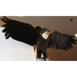 http://animalprops.com/41-thickbox_default/liberty-giant-bald-eagle-display-prop.jpg