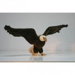 http://animalprops.com/43-thickbox_default/liberty-giant-bald-eagle-display-prop.jpg