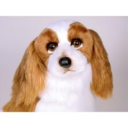 http://animalprops.com/769-thickbox_default/charles-cavalier-king-charles-spaniel-stuffed-plush-animal-display-prop.jpg