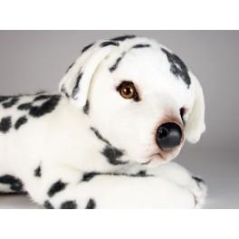 http://animalprops.com/927-thickbox_default/spottie-dottie-dalmatian-dog-stuffed-plush-animal-display-prop.jpg