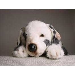 http://animalprops.com/937-thickbox_default/blaze-dalmatian-dog-stuffed-plush-animal-display-prop.jpg