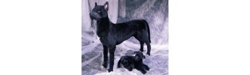 Great Danes Black